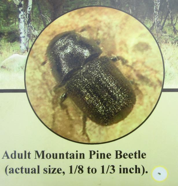 Rocky Mountain - 1 (3)