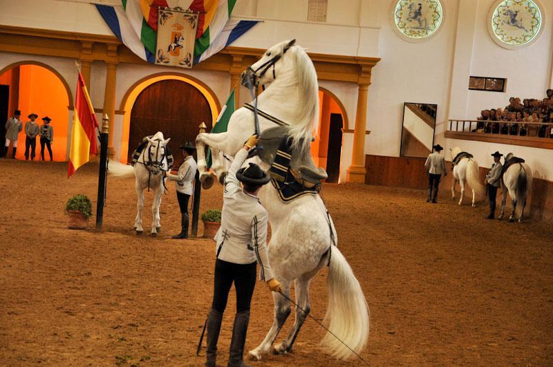 horseshowandalucia